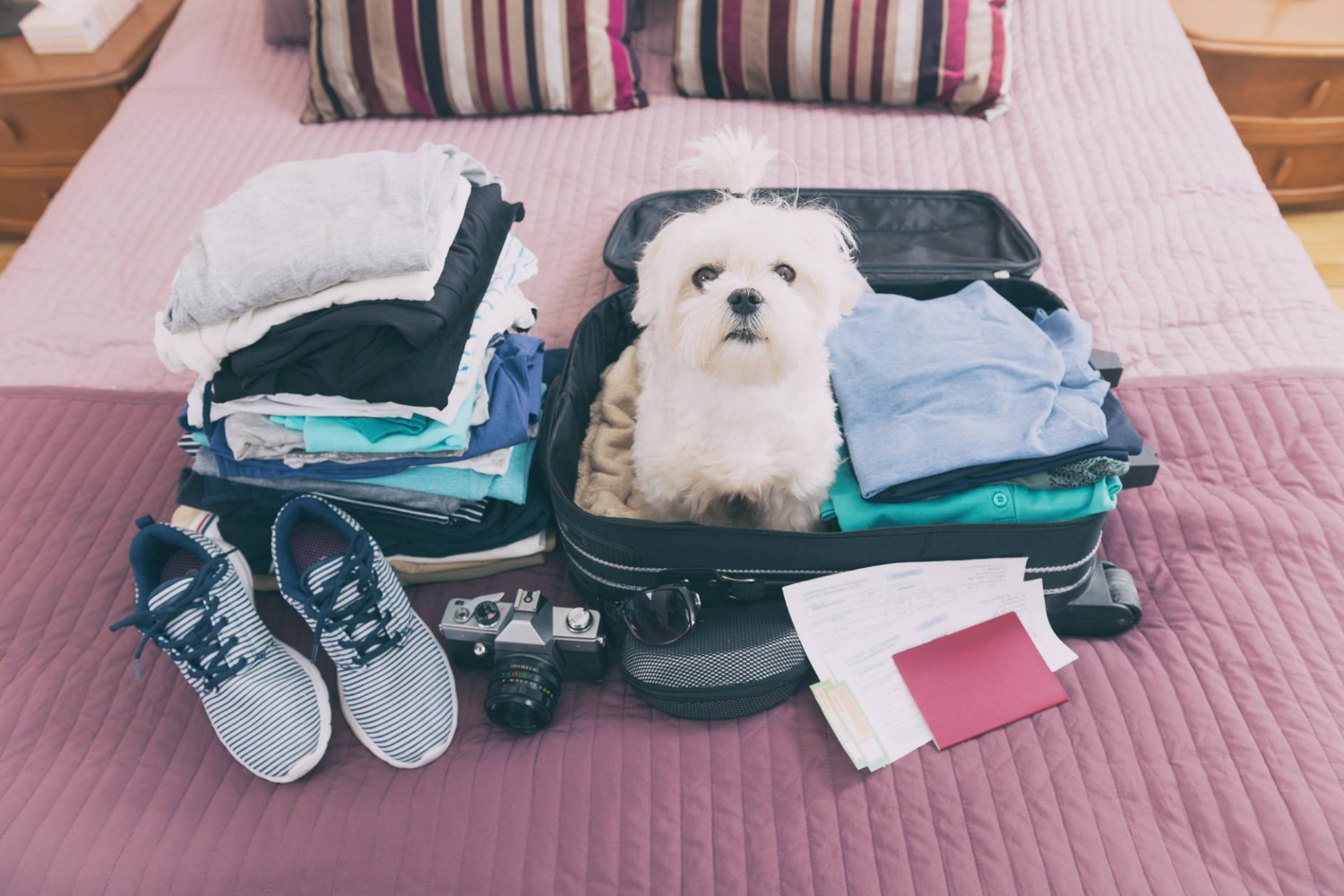 small dog in suitcase