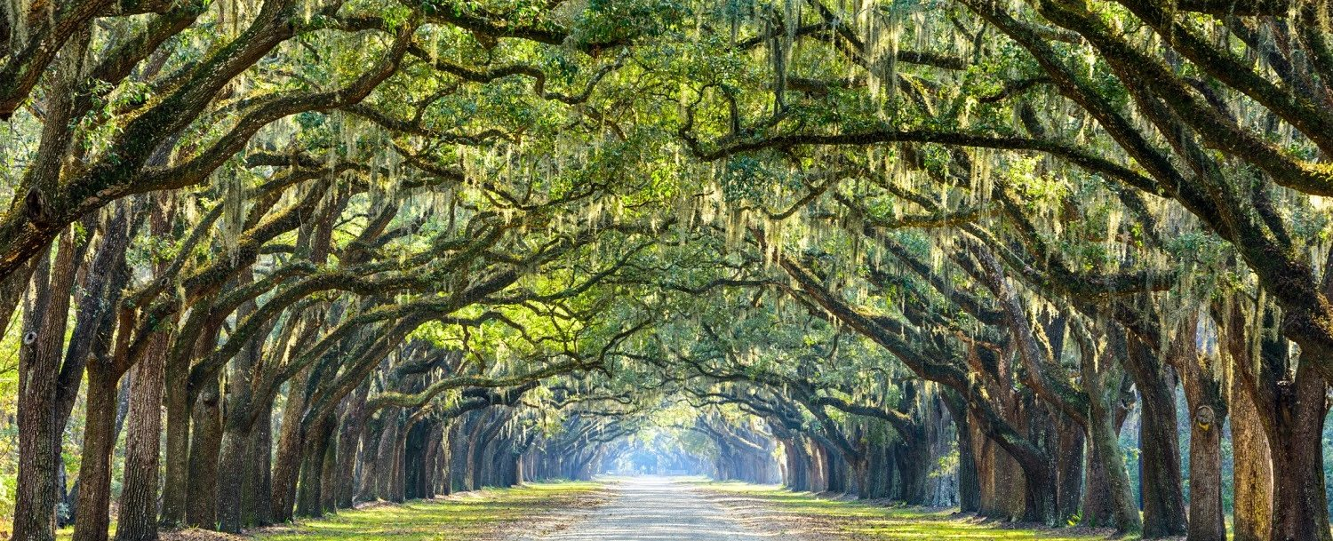 Is The Wormsloe Historic Site Worth A Visit Presidents 39 Quarters Inn