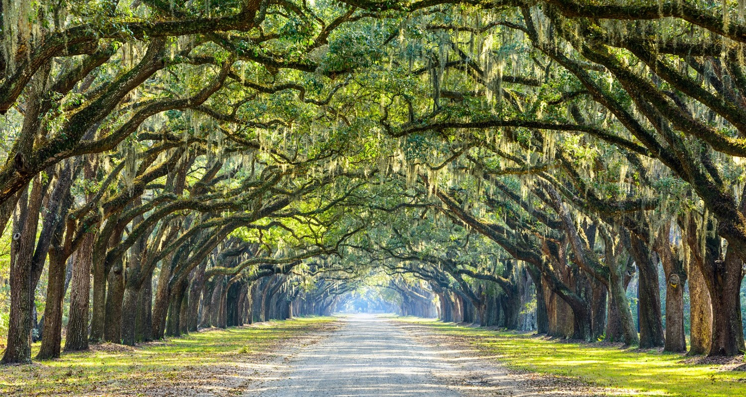 Is The Wormsloe Historic Site Worth A Visit Presidents